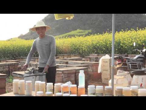 пчеловоды китая