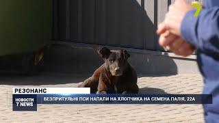 В Одессе стая собак напала на школьника (видео)