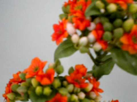 Fiore artificiale kalanchoe
