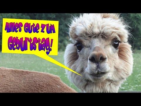 tierische Geburtstagsgrüße zum lachen, lustiges Geburtstagsvideo, Geburtstagslieder von Thomas Koppe
