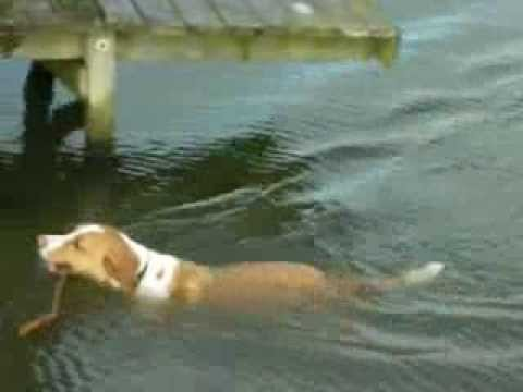 Schwimmender Hund :-)