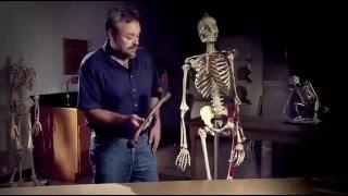 Человек разумный /  Homo erectus Vs Homo sapiens