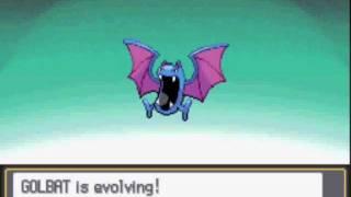 Crobat  - (Pokémon) - Pokemon Heart Gold : Golbat evolving to Crobat at level 26