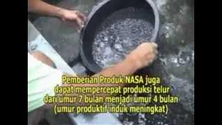 preview picture of video 'TIPS PEMBENIHAN - PEMIJAHAN BIBIT LELE DAN INDUKAN LELE - BANTUL'