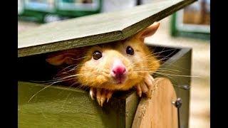 Смешные зверята | Видео приколы про детенышей животных