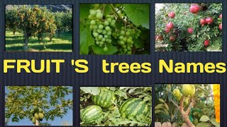 FRUITS  TREES NAMES