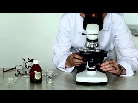Paraziták és crijevima pasa