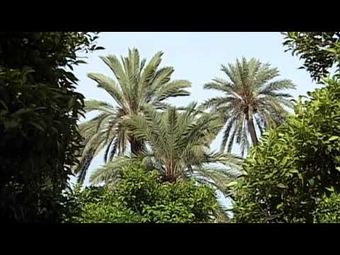 ДК Непутевые заметки - Андалусия и Кордо
