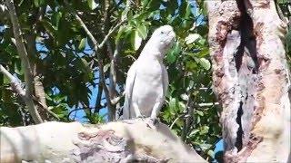2015-09-27 Cockatoos, Jabiru, Kakadu