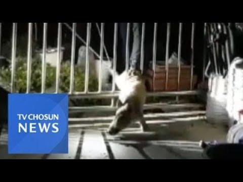부산 주택가에 새끼 멧돼지 출몰…1시간 만에 사살