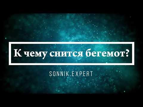 К чему снится бегемот - Онлайн Сонник Эксперт