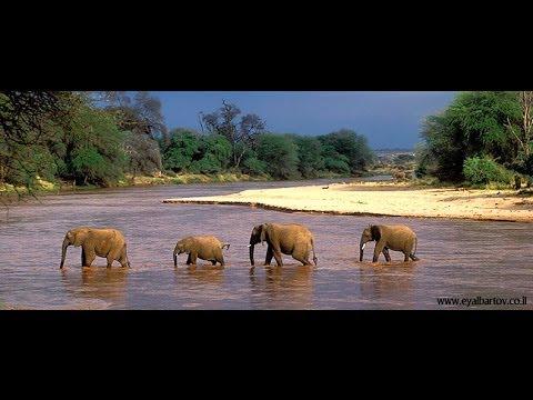נפלאות הטבע של שמורת סמבורו בקניה