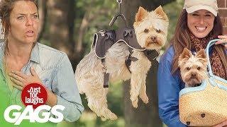 bromas farsa cómica con perros