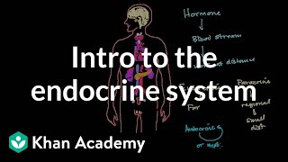 Intro to the Endocrine System