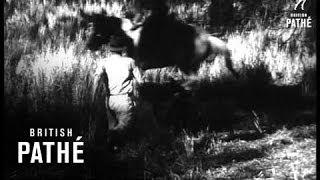 Australia - Wild Pig Hunt (1940-1949)