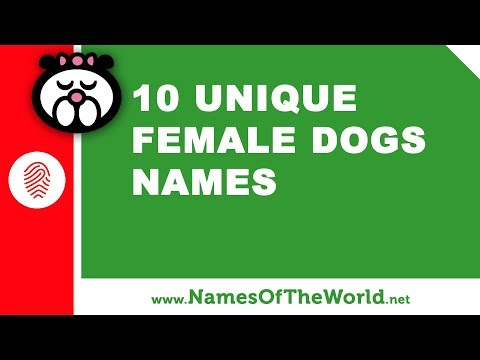 10 Unique Female Dogs Names -  The Best Pet Names - Www.namesoftheworld.net