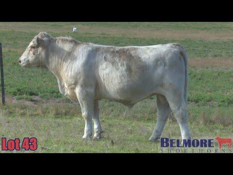 BELMORE TREMAIN Q333