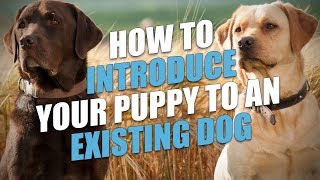 How to Introduce New Puppy to Current Dog (So They Get Along)