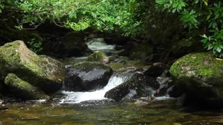 Nature Sounds & Classical Piano Music by Frederic Chopin-Sound of Water & Birds Singing-