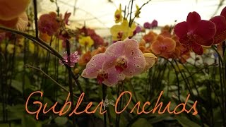 Wander List ~ Exotic Flowers Blossom at Gubler Orchids