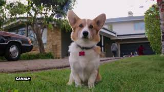 Był sobie pies | po raz pierwszy w TV | zwiastun CANAL+