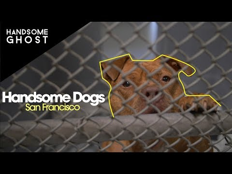 Handsome Dogs | Handsome Ghost Visit Friends Of Alameda Animal Shelter In San Francisco