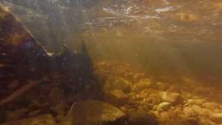 preview picture of video 'Fall Salmon Tour in Owen Sound, Ontario'