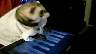 Клавиатурный хорек