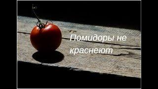 Почему помидоры не краснеют//Что нужно сделать