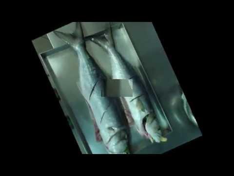 La pesca su un abramide comune nellestate su una verga di galleggiante di video