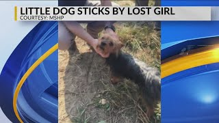 Lost Toddler Accompanied by Yorkie until Found