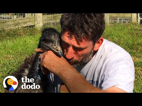 This Emu is in Love With a Human