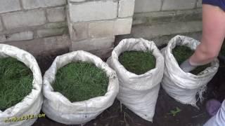 Выращивание картофеля в мешках - эксперимент