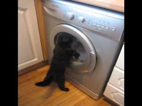Robocop versus the washing machine!!!!