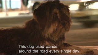 Lost Dog's Reaction When He Found His Owner In 4 Months   Kritter Klub