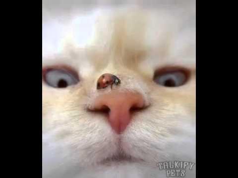 Quello che è possibile dare a un gattino mensile da vermi