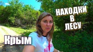 Отдых в горном Крыму 2018. Дары леса, природа Крыма, Бельбек