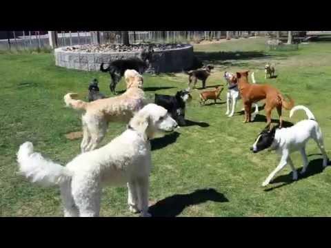 Hydrant Club Canine Choral Society