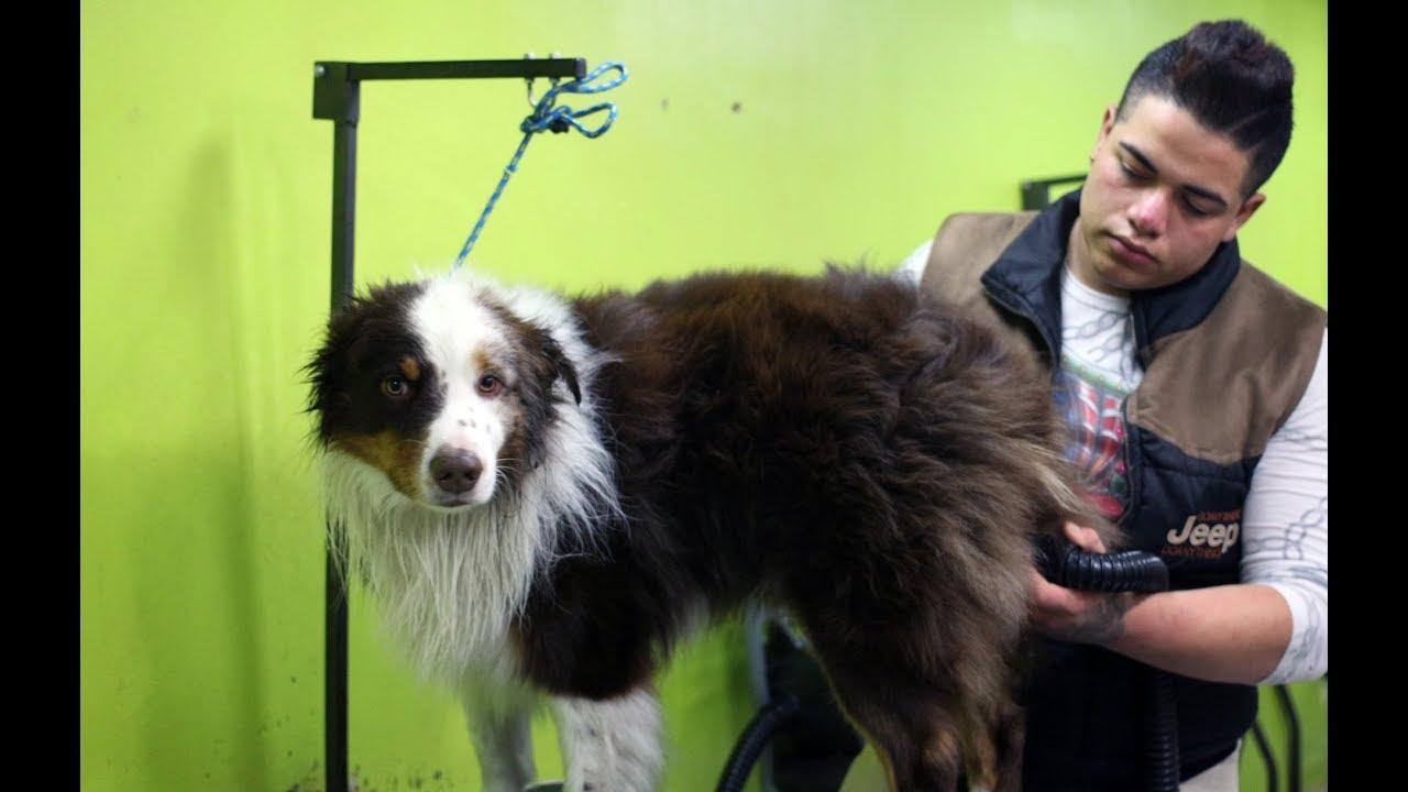 El lujo del spa revoluciona la forma de cuidar y consentir a las mascotas