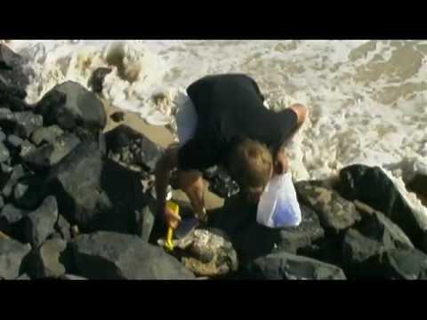 Meet a Local Travel Series dvd  - East Coast Australia
