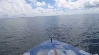 preview picture of video 'Mauritius - Zwei Delfine im Indischen Ozean'