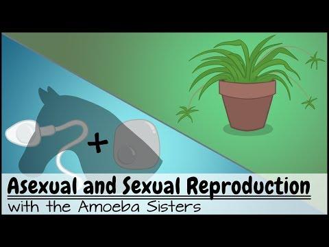 Riprodurre video di sesso