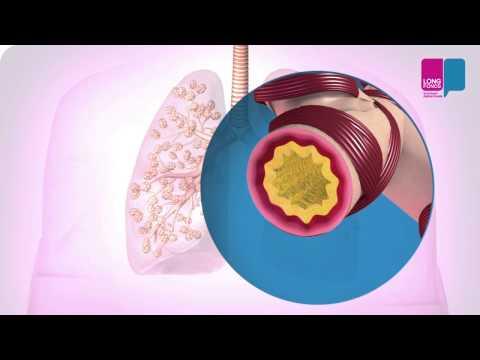 Mehhanismid vererõhu normaliseerimiseks
