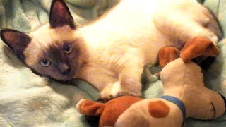 Cute And Funny Cat Videos To Brighten Your Day! 🐱