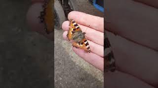 Нашли бабочку на прогулке