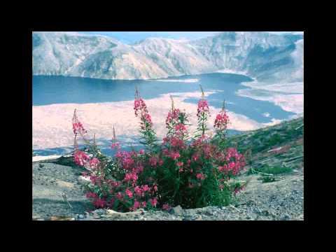 Rainbow Brahma sings