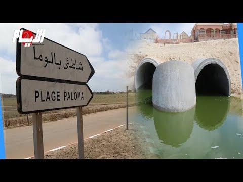 العرب اليوم - كارثة بيئية تضرب شاطئ
