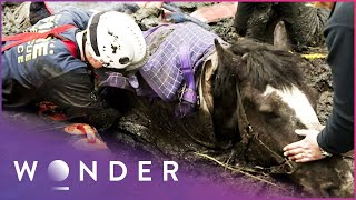 Elite Rescue Team Called To Save Trapped Horse   Living Dangerously   Wonder