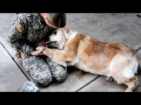 6 ANIMALS THAT HAVE BEEN WAITING FOR THEIR OWNERS FOR A LONG TIME. SAD ANIMAL STORIES