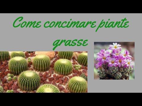 Come concimazione piante grasse